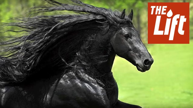 frederik the great worlds most handsome horse the weather channel - Homemade Scooter Cover Horse Plans