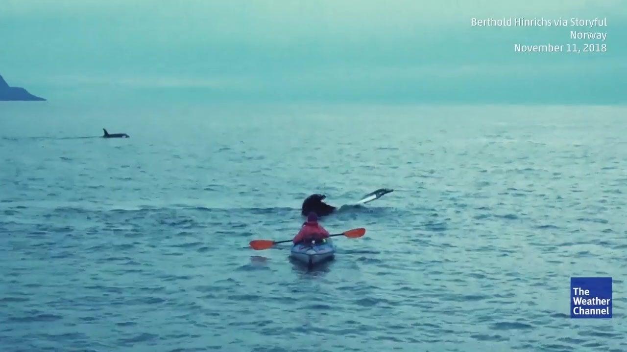 Kayker tem encontro com baleia