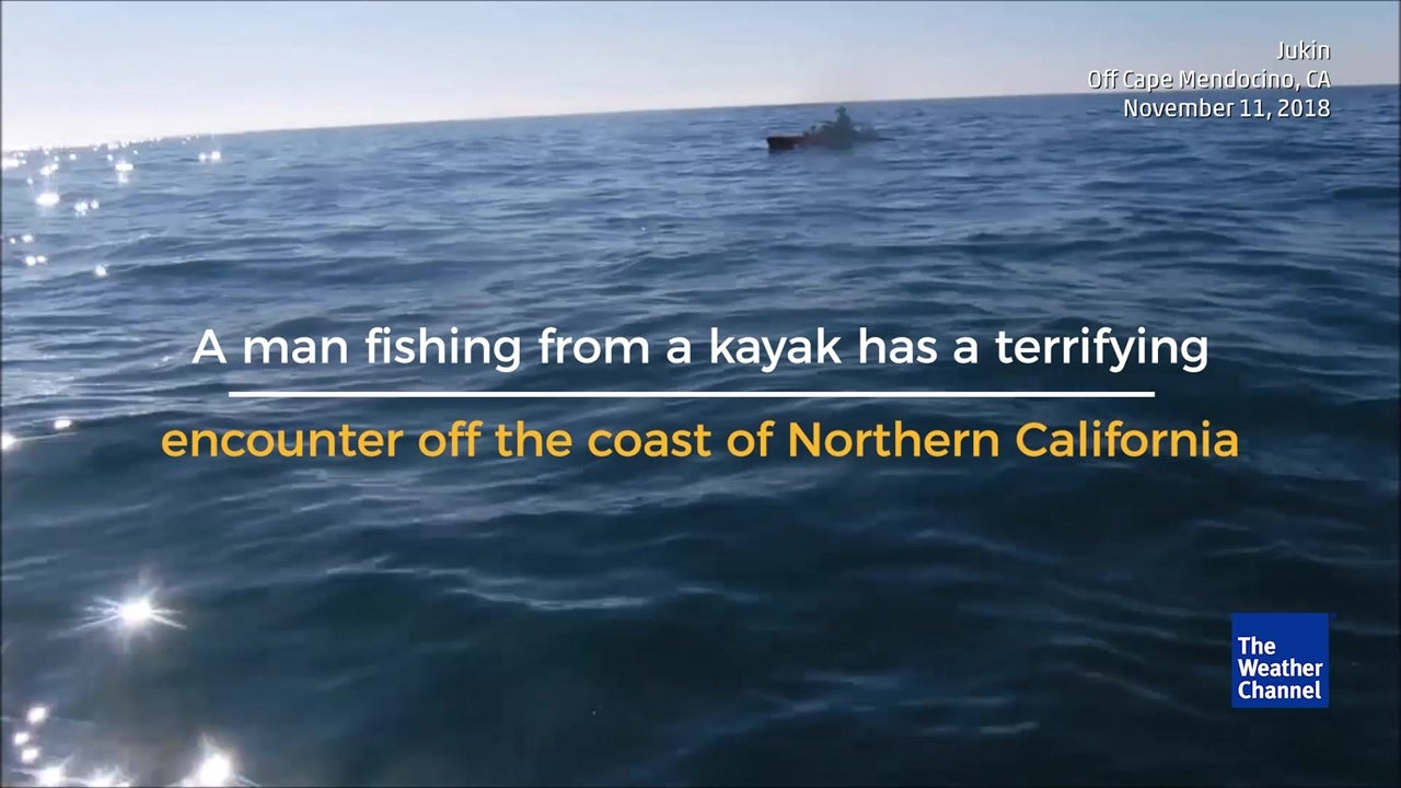 Kayaker escapes terrifying encounter with killer shark