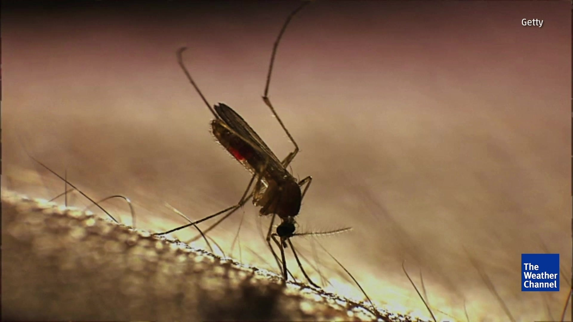 Study: Mosquitoes Stay Away from Those Who Swat at Them