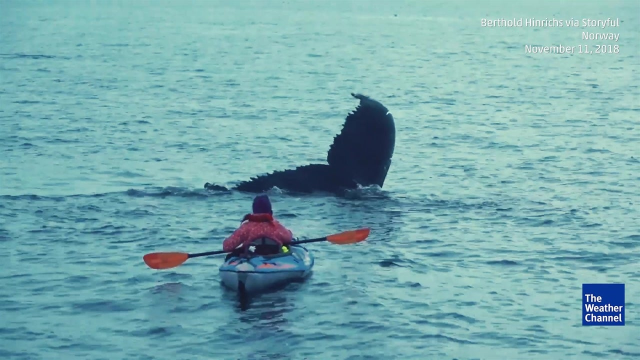 Kayaker Gets Amazing Show