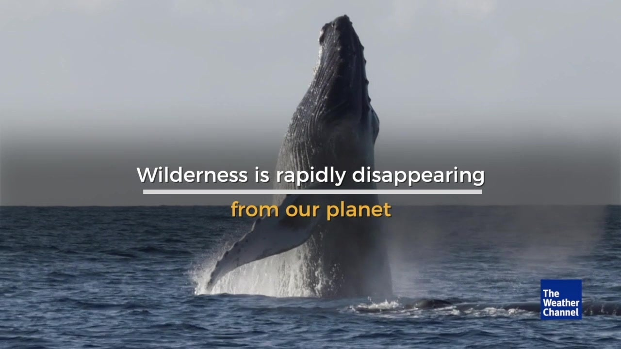 New study discovers ocean wilderness is rapidly disappearing