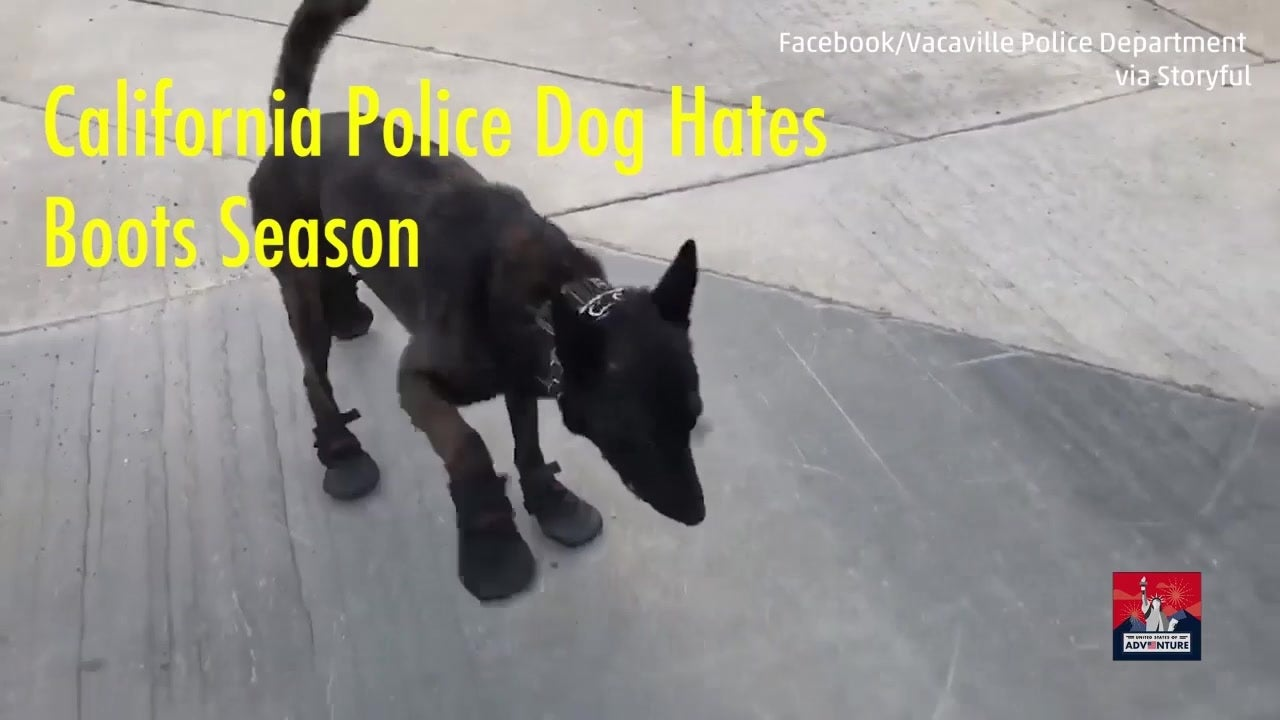 Hilarious police dog hates new boots the weather channel solutioingenieria Gallery