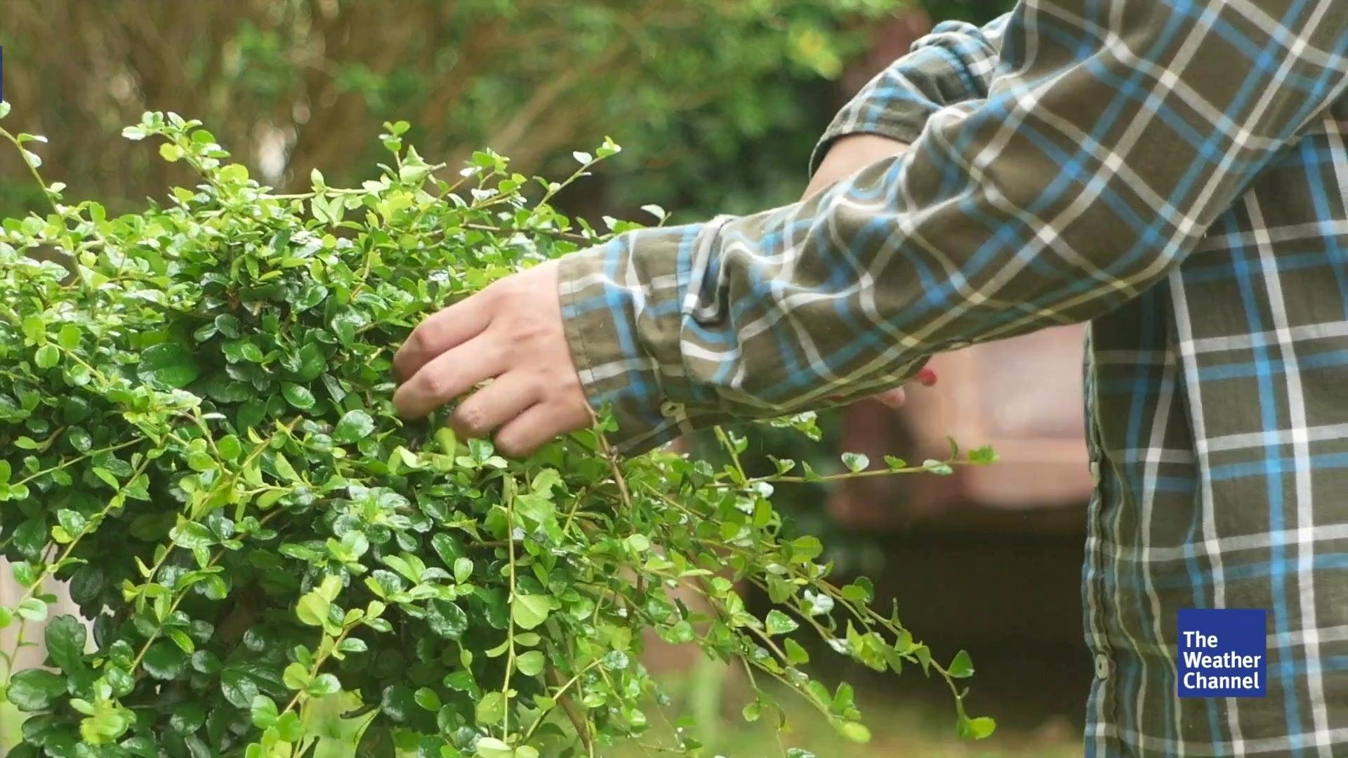 Pflanzenwelt erwacht das sollten hobby g rtner jetzt - Weiayer garten ...