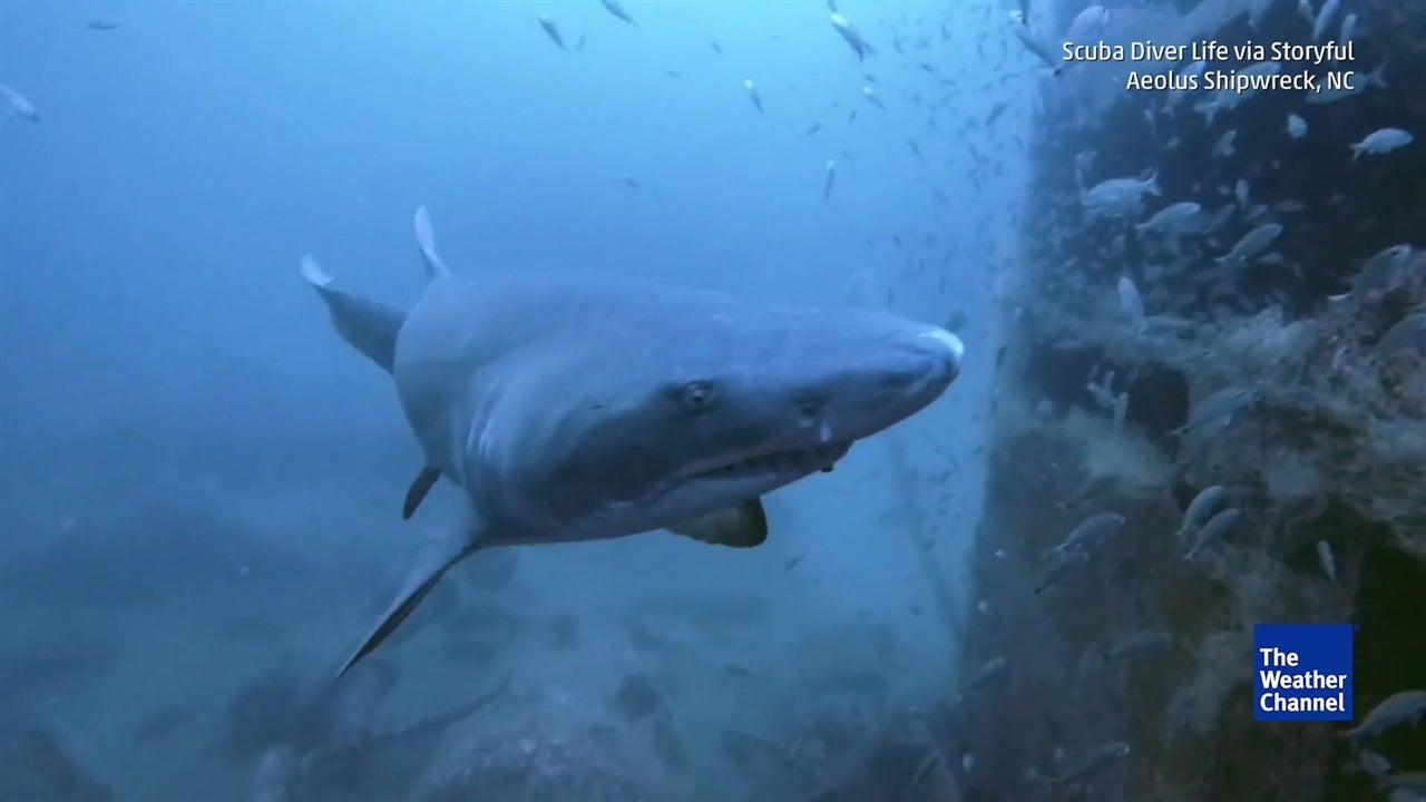 Sneaky shark startles scuba diver from behind