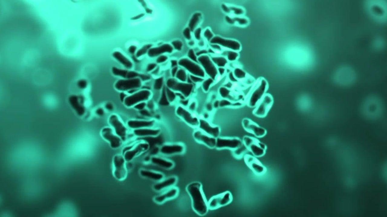 Bubonic Plague Found in the U.S.
