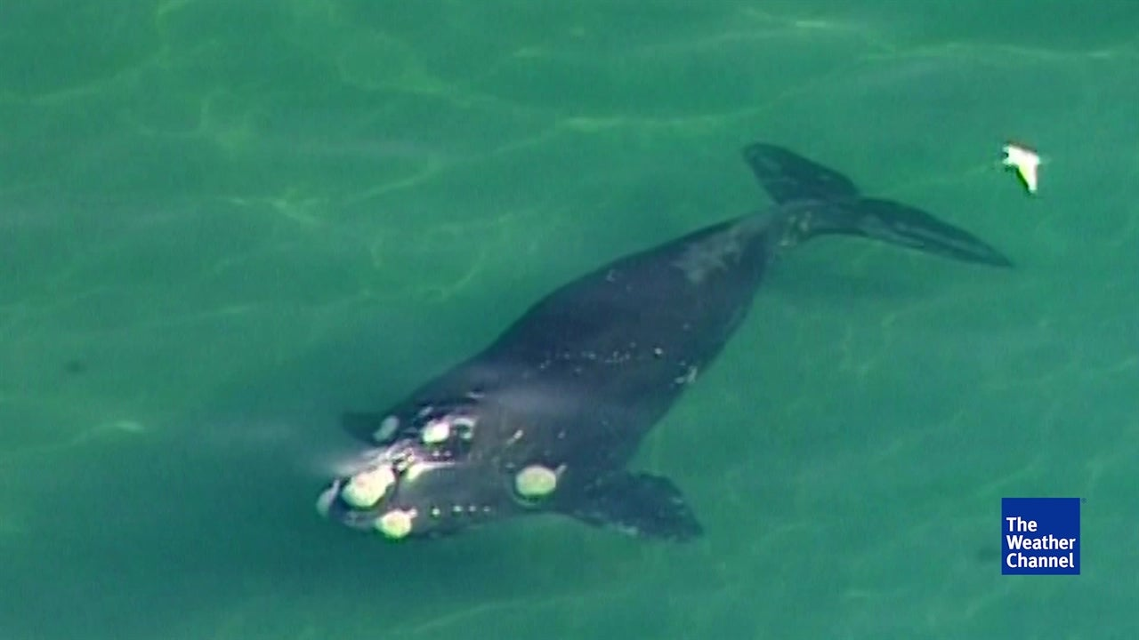 Trump Admin. Allows Seismic Tests That Could Harm Marine Life
