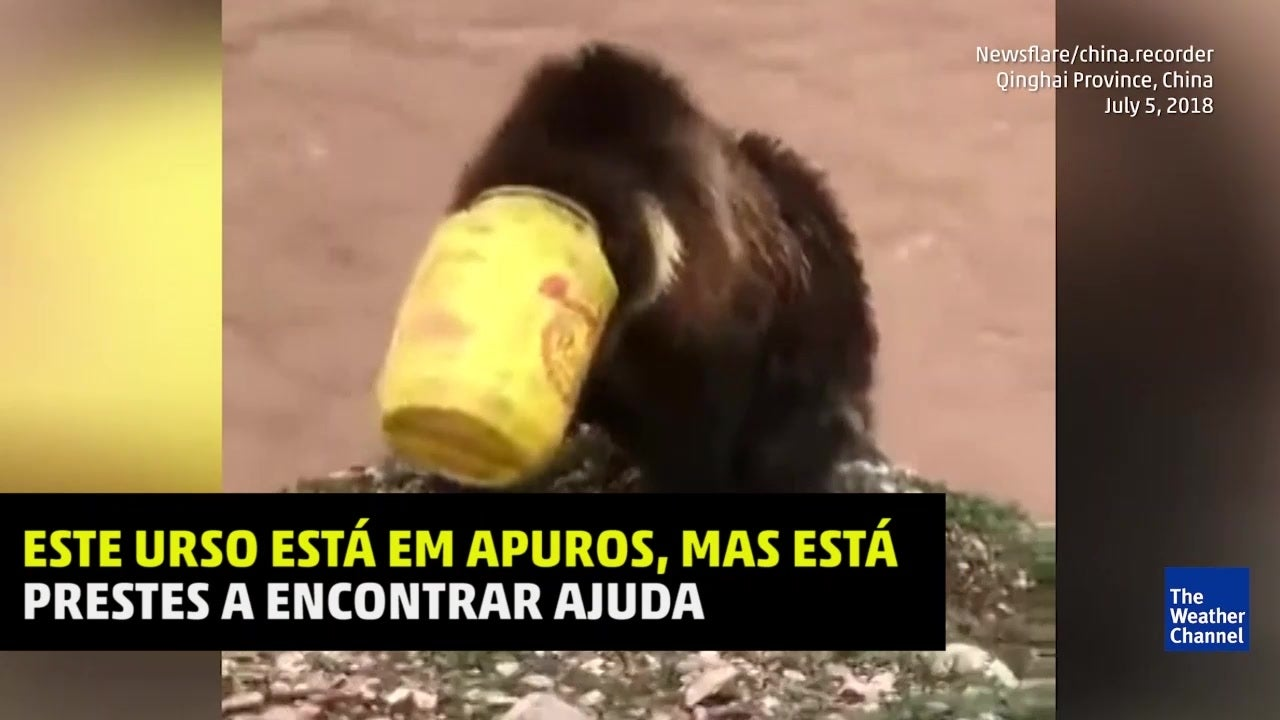 Aldeões salvam urso com balde preso na cabeça
