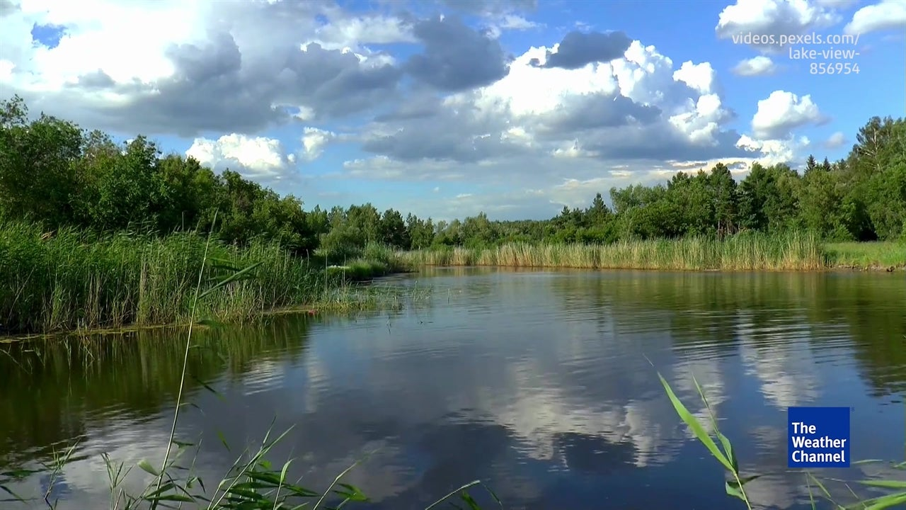 Saving India's Wetlands
