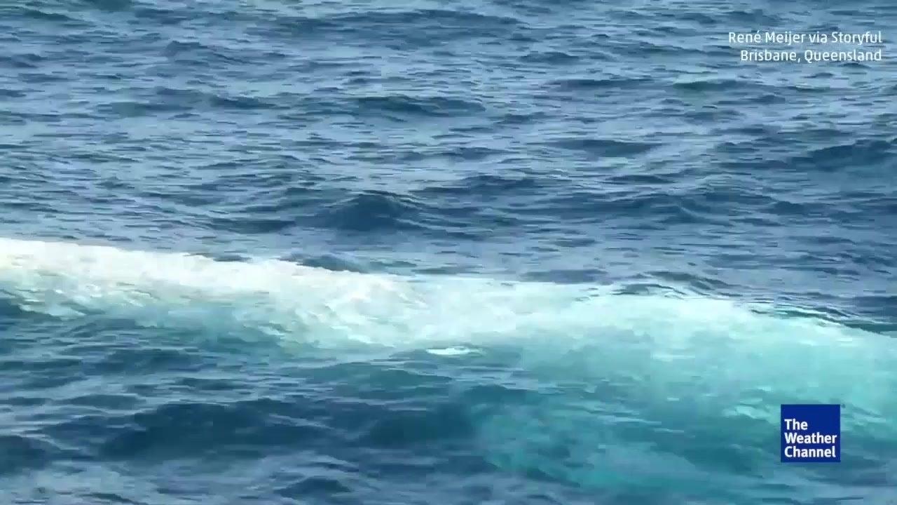L'unique baleine à bosse albinos filmée dans les eaux australiennes