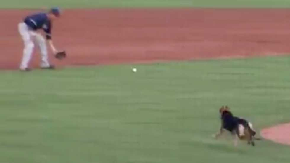 Dog Goes Crazy During Baseball Warm up in Tulsa, Oklahoma