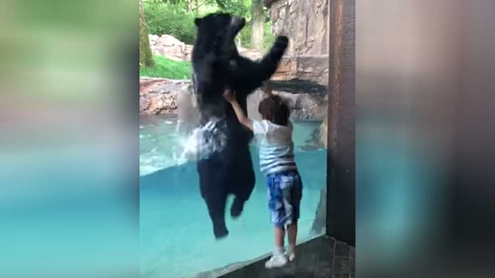 Bear Imitates Tennessee Boy as He Jumps for Joy