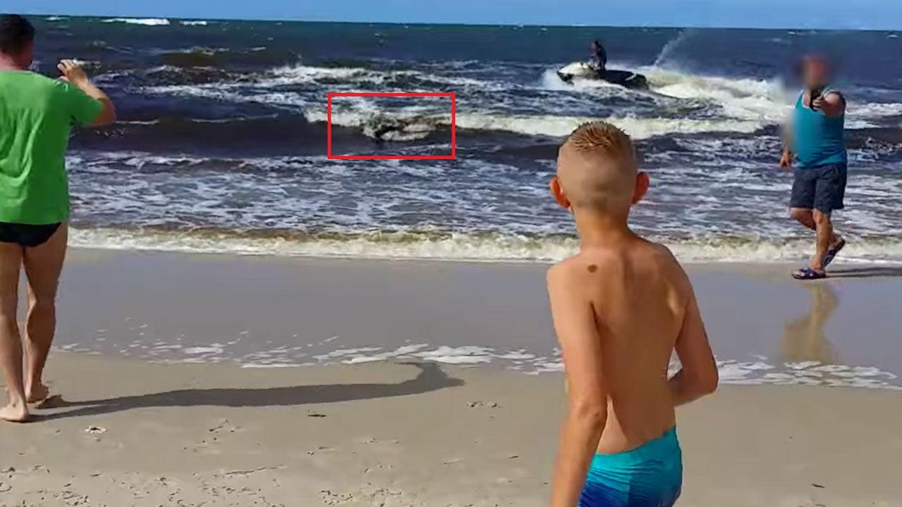 Polish Beachgoers Charged by Boar