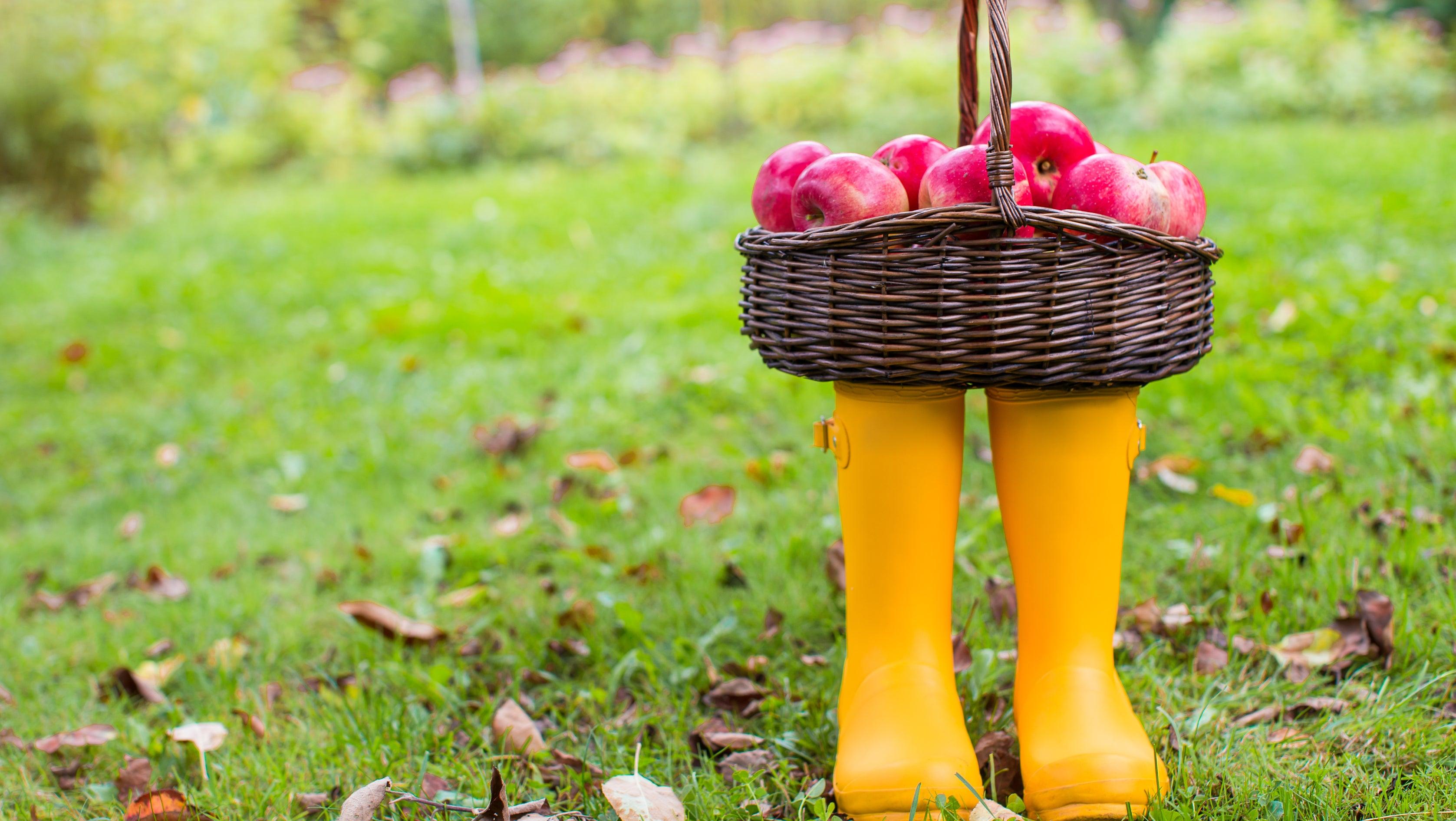 Herbstzeit ist pflanzzeit welche blumen sie jetzt - Weiayer garten ...