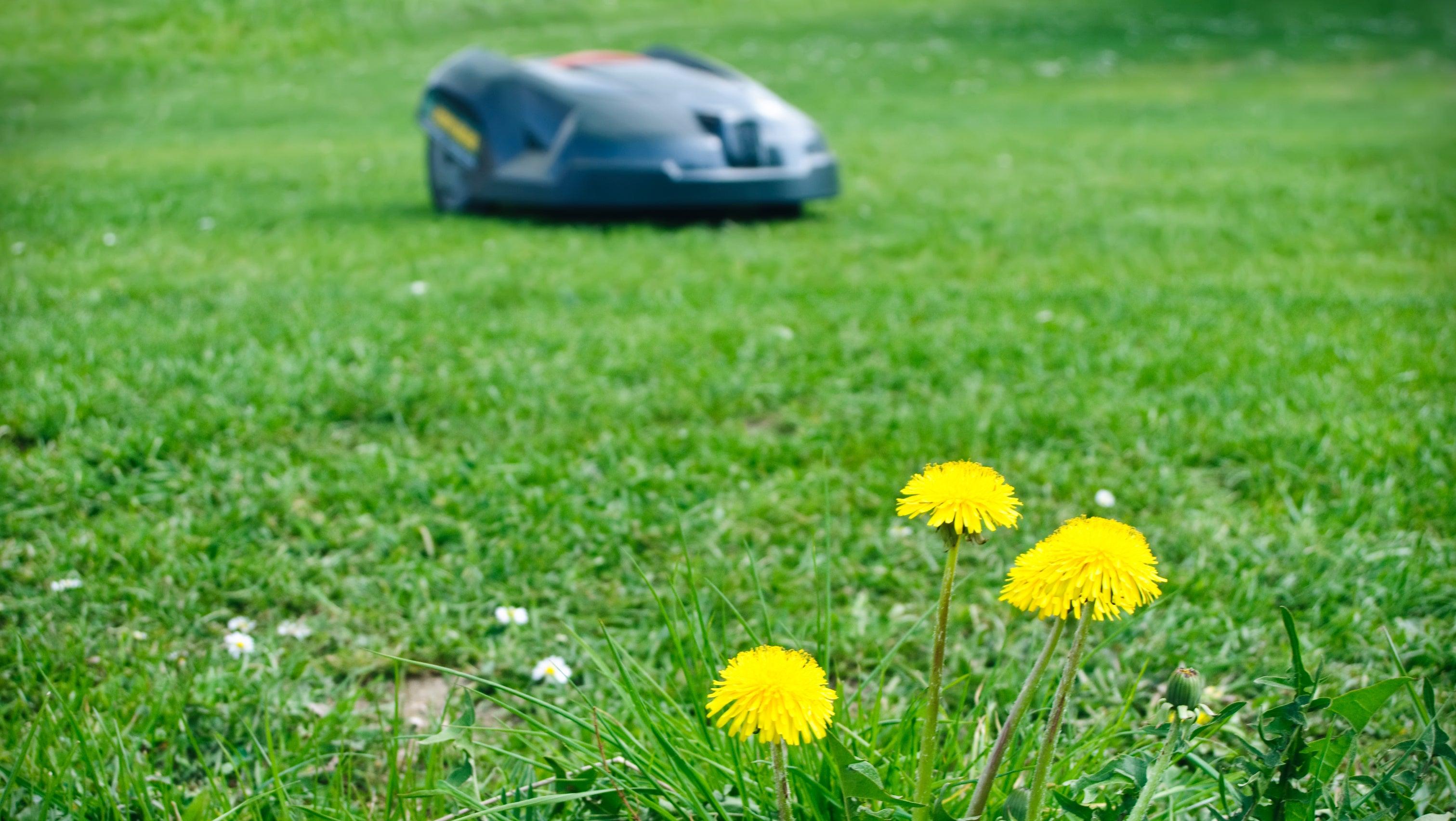 Darum sollten Sie automatische Rasenmäher nicht nachts einsetzen