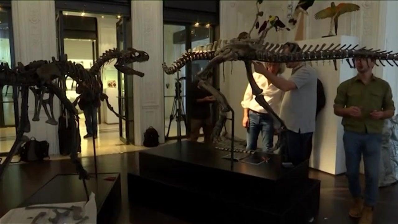 Dois fósseis de dinossauros vão a leilão