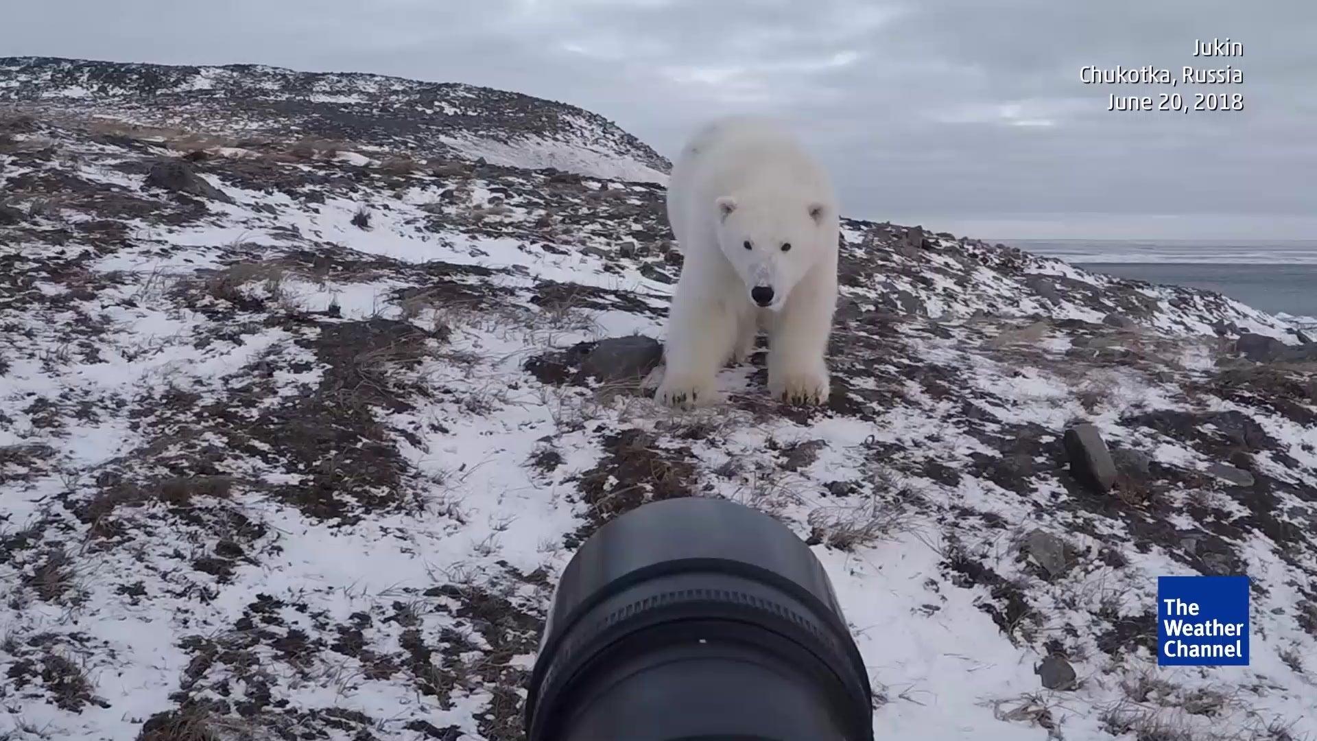 Fotograf trifft Eisbär - ein Machtkampf entbrennt