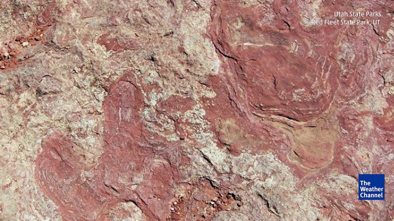 Red Fleet State Park Visitors Throw Dino Tracks into Lake