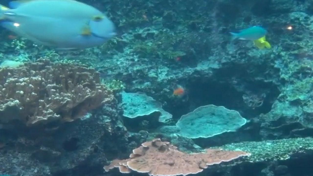 coral reef awareness week at the atlanta aquarium