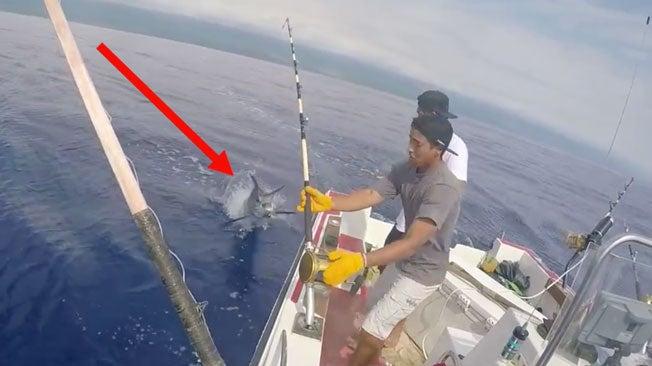Marlin Jumps Into Boat