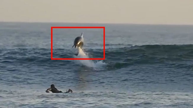 Surfer Surprise: Look What Was Lurking Below