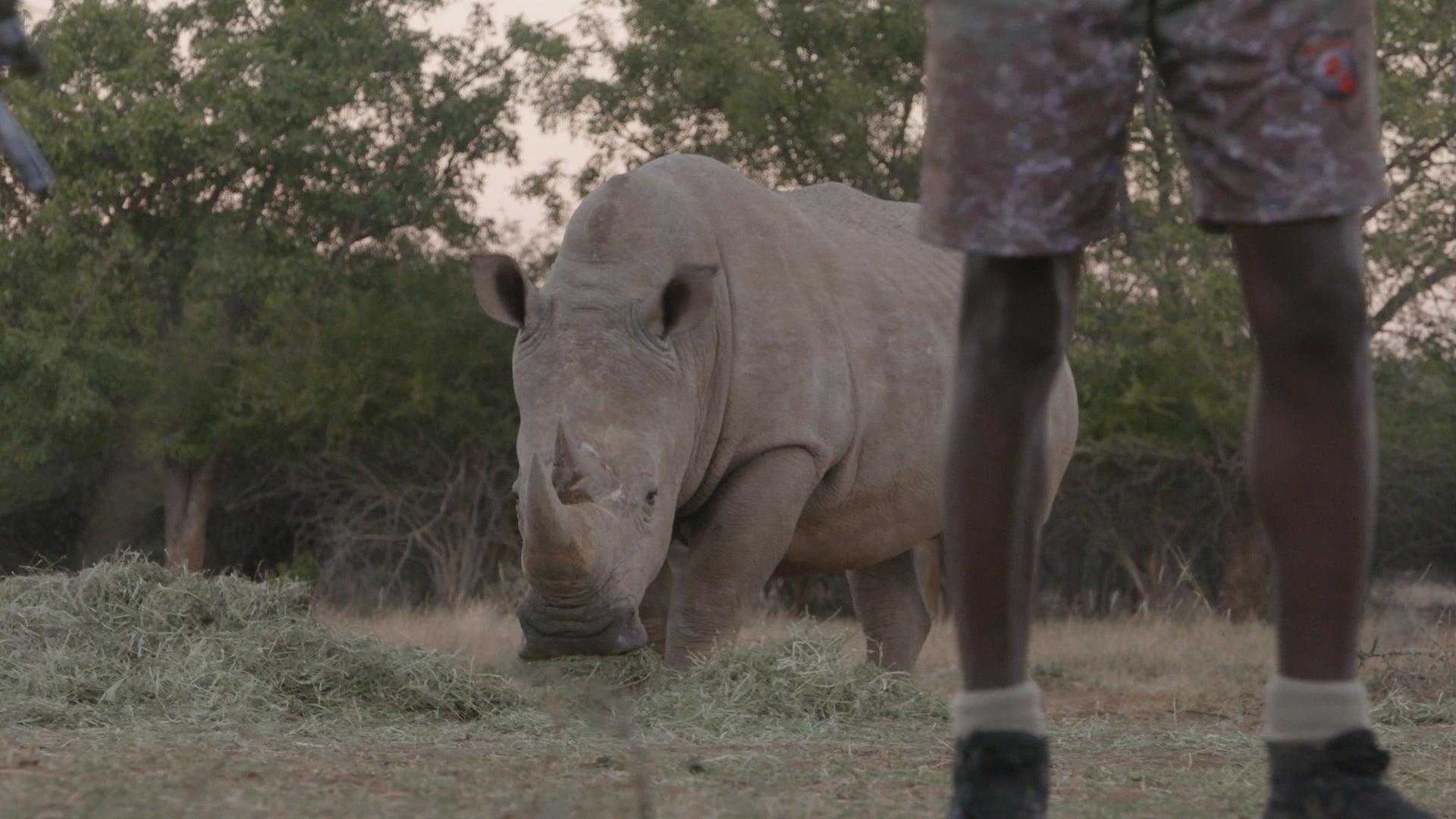 DNA Helps Nab Rhino Poachers