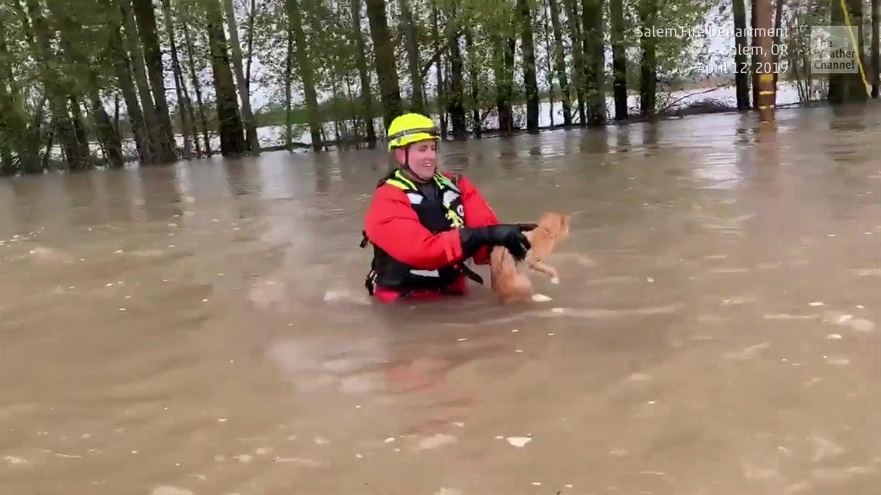 Rescatan a gato en medio de inundación