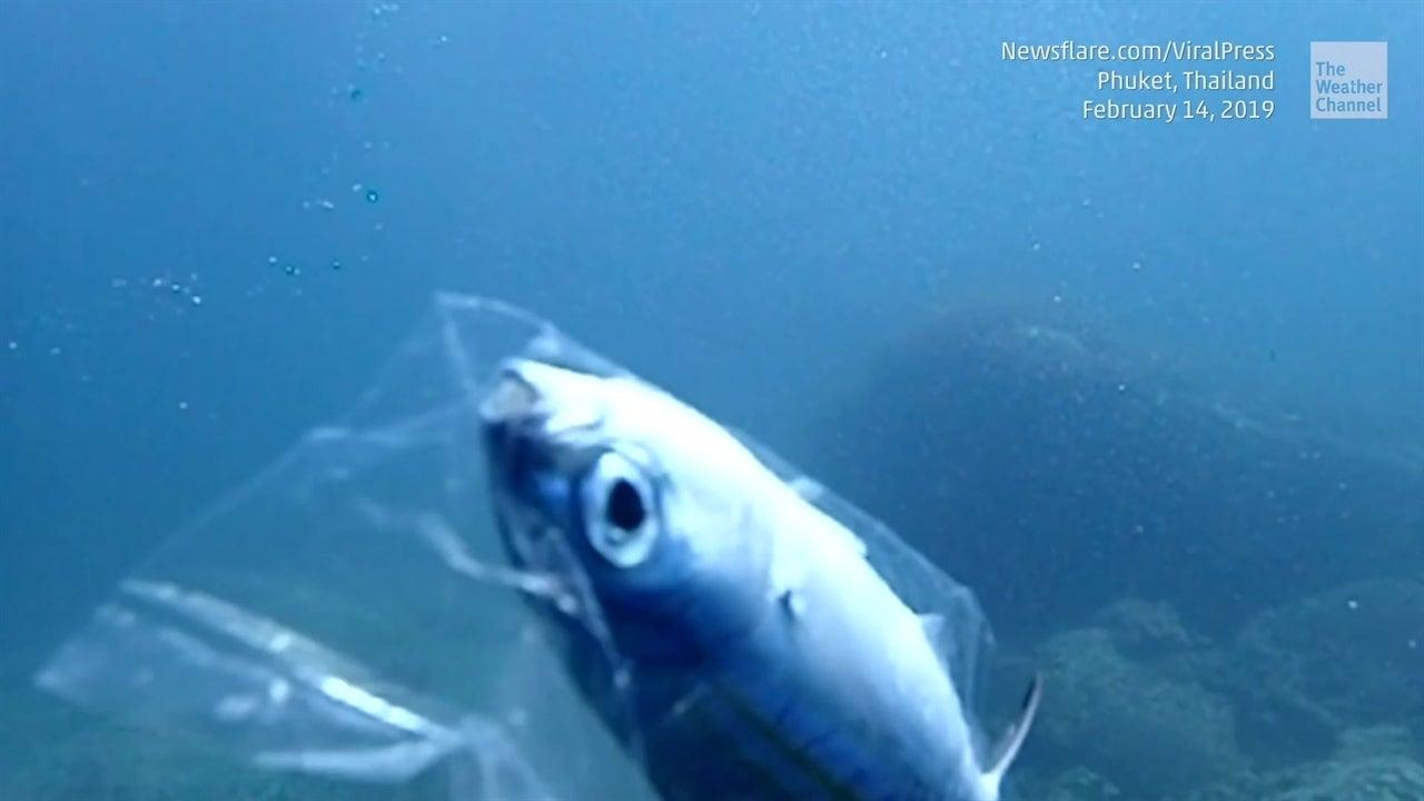 Pez lucha para escapar de bolsa plástica