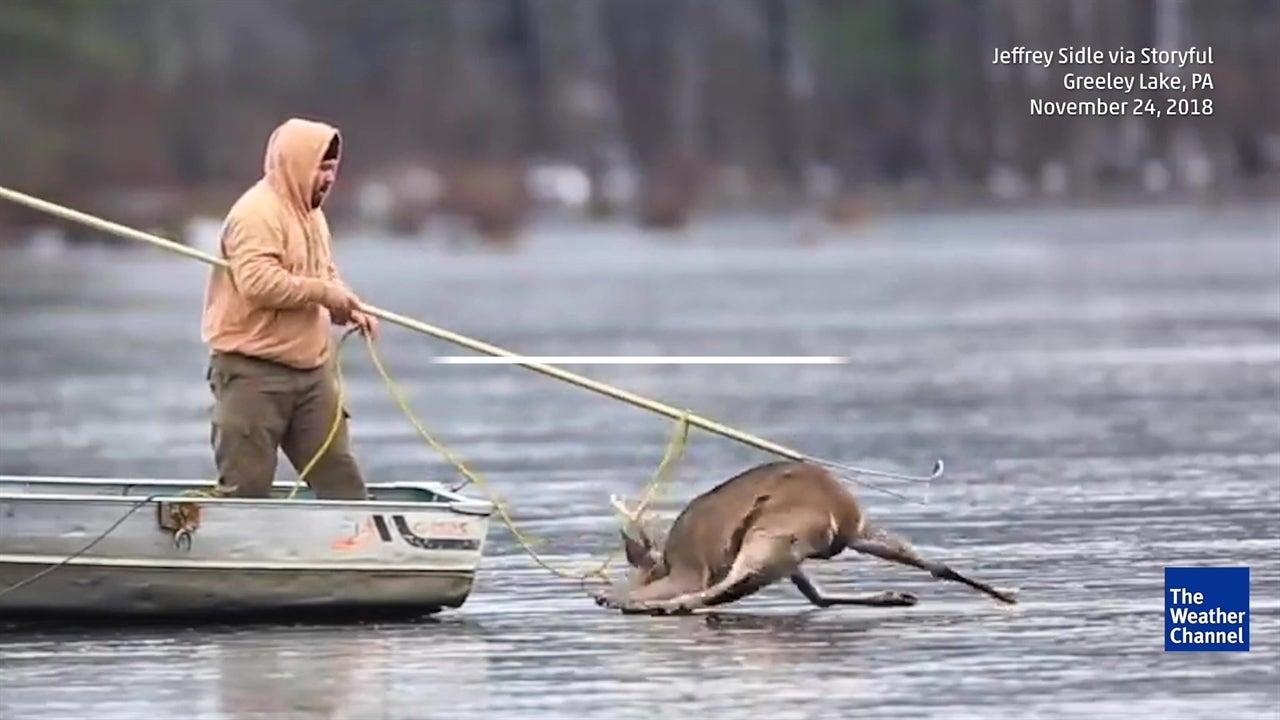 Cazadores terminan ayudando a ciervo en peligro