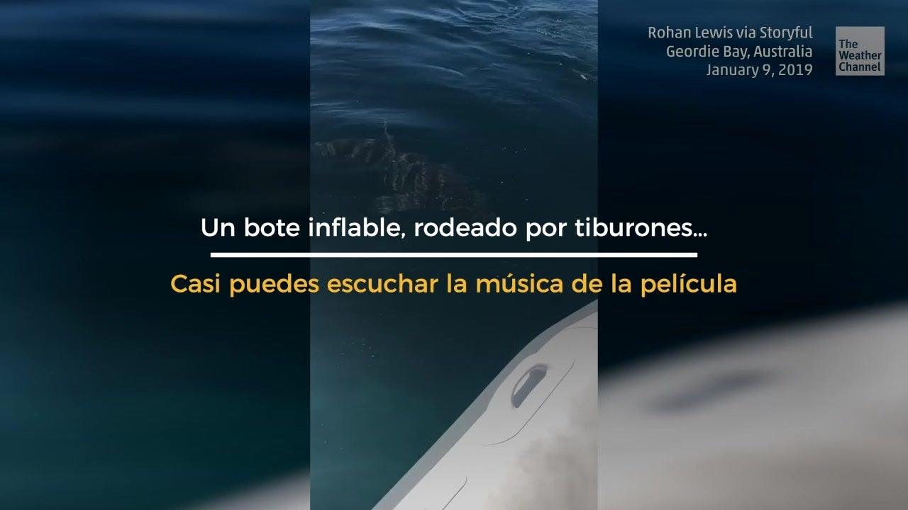 Tiburones acechan balsa