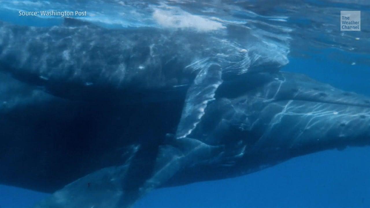 Récord de ballenas muertas en California