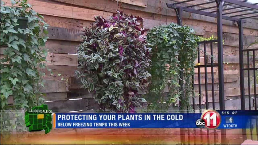 Protecting your plants when a freeze is imminent