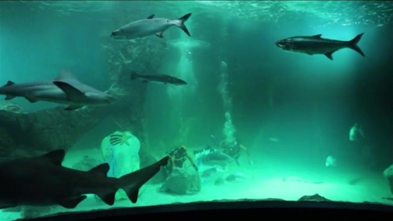 Mergulhadores montam presépio entre tubarões