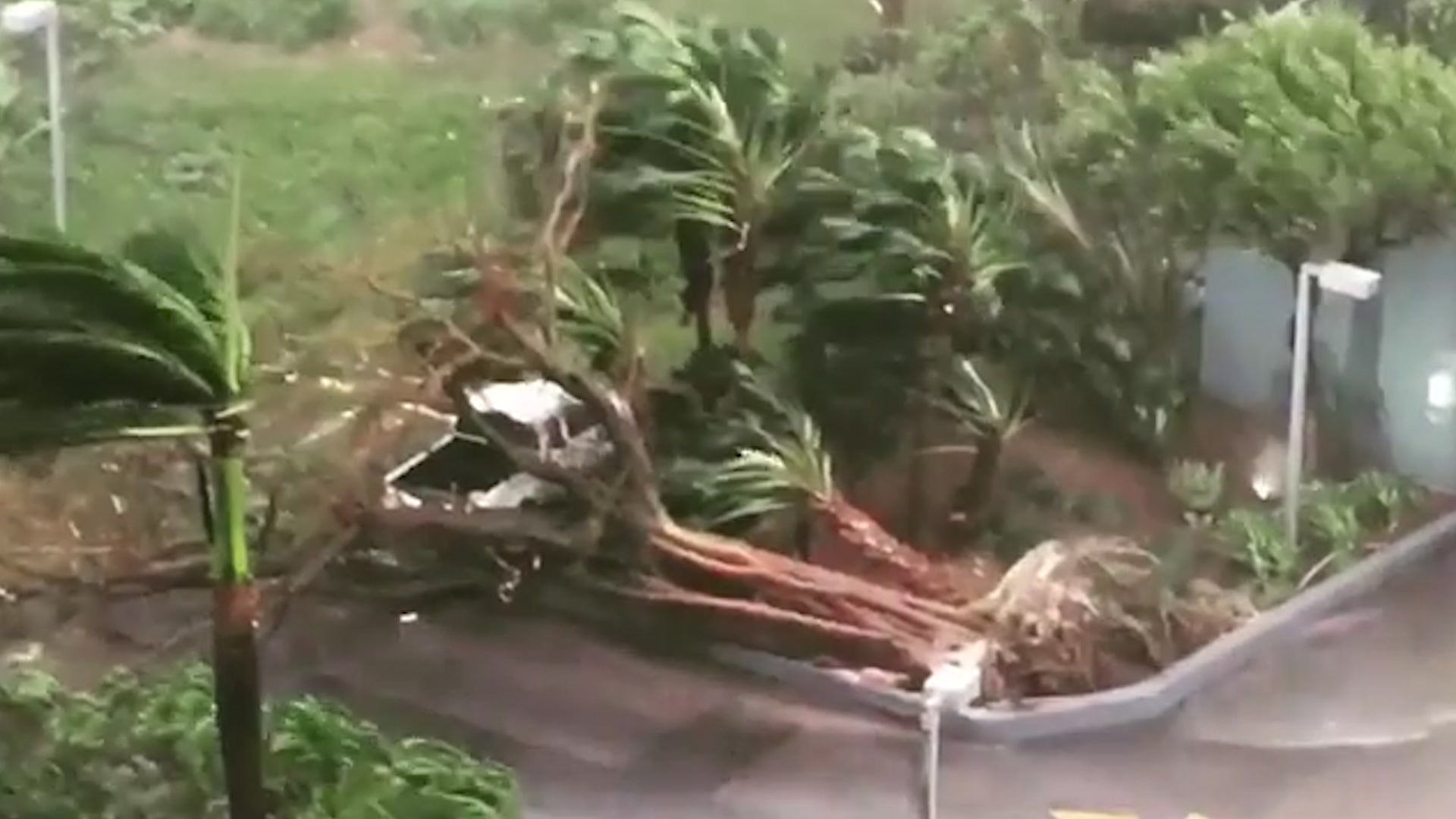 Irma Winds Uproot Trees In Miami The Weather Channel
