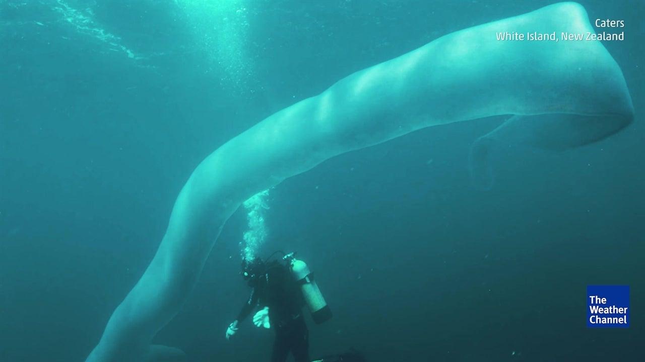 Divers Discover Huge 26-foot Deep-sea Worm