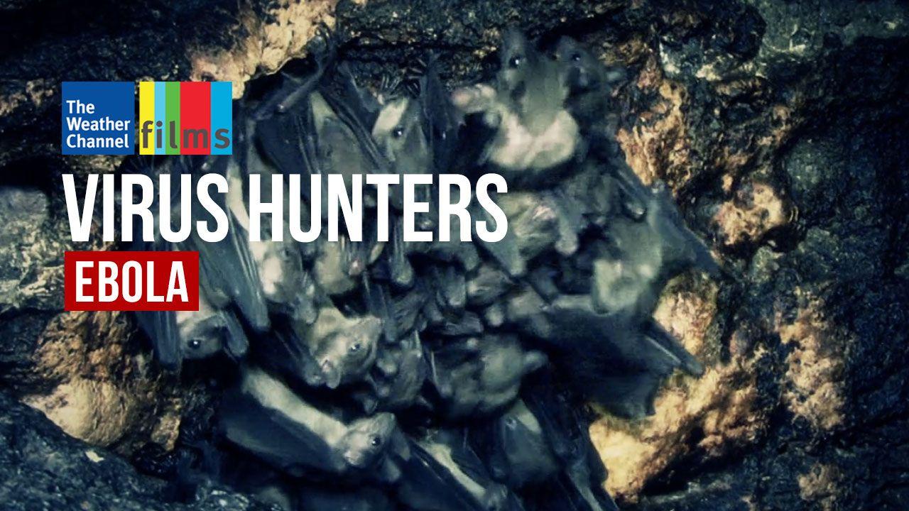 Virus Hunters: Ebola