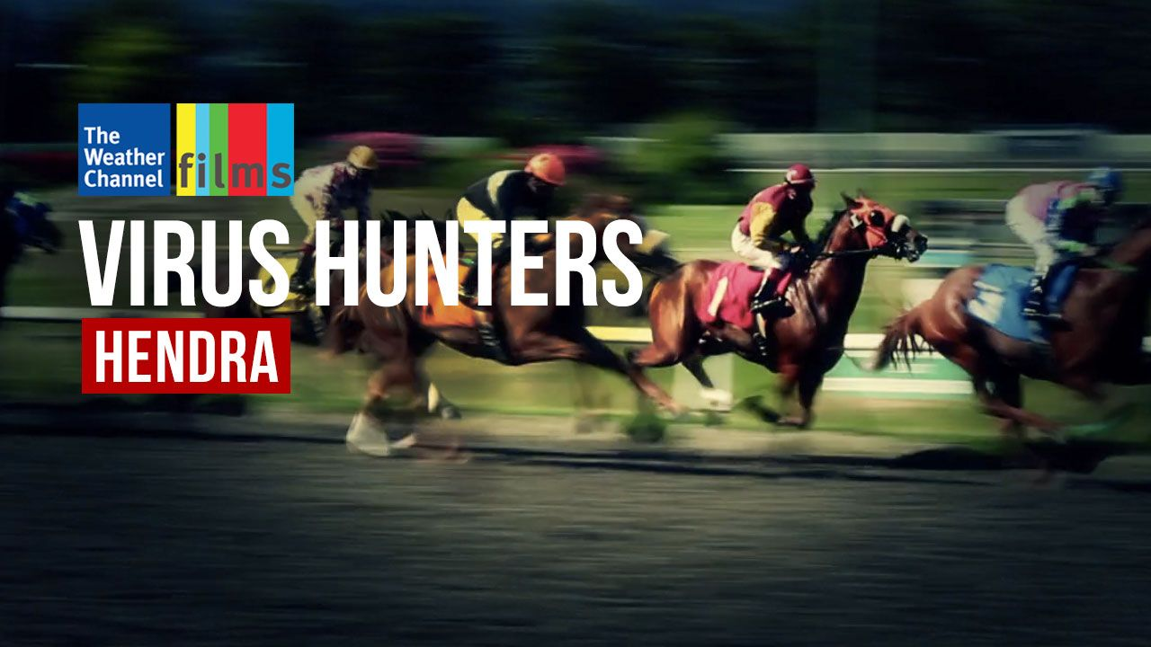 Virus Hunters: Hendra