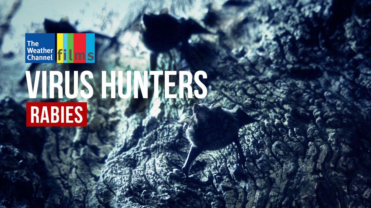 Virus Hunters: Rabies