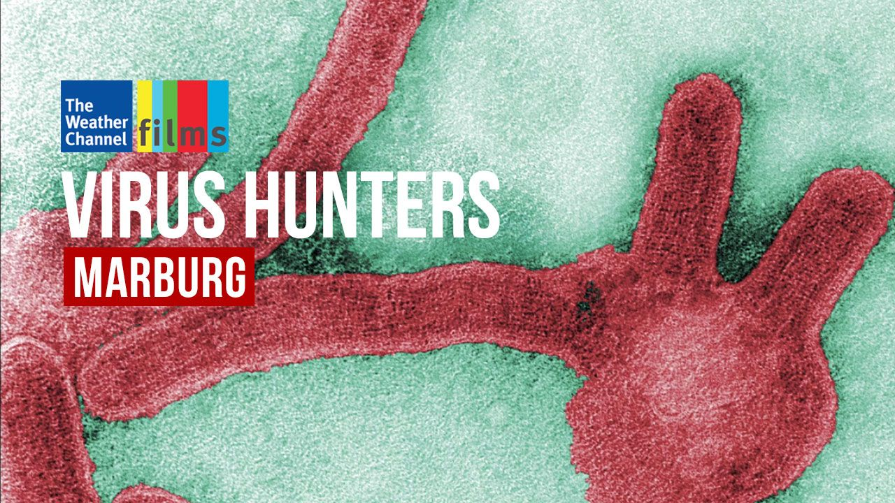 Virus Hunters: Marburg